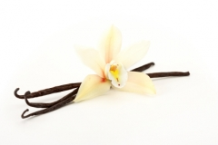 orchid with vanilla